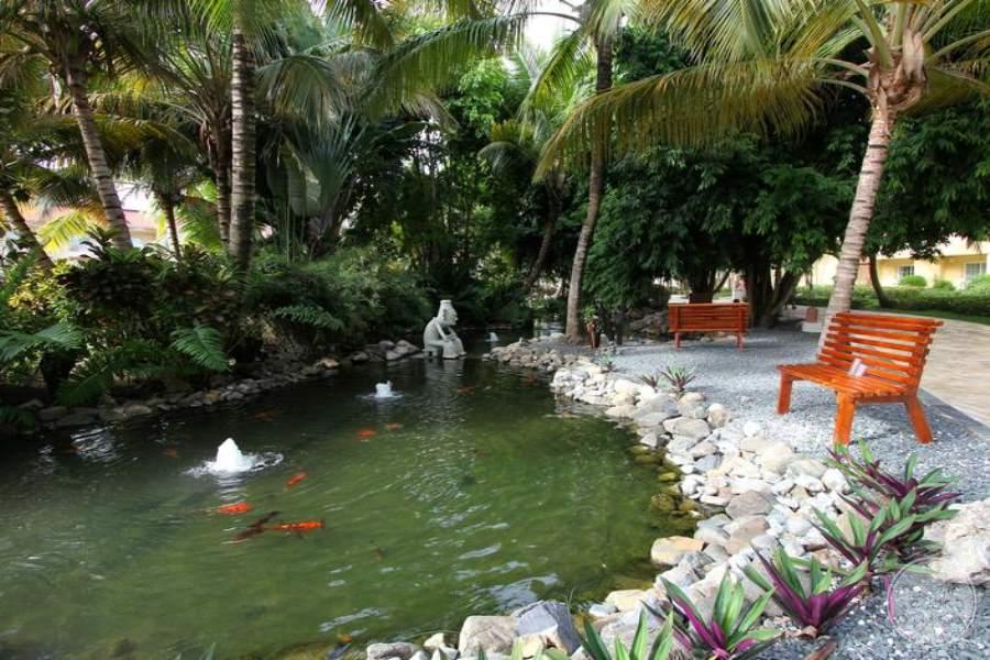 Dreams Punta Cana Swan Pond