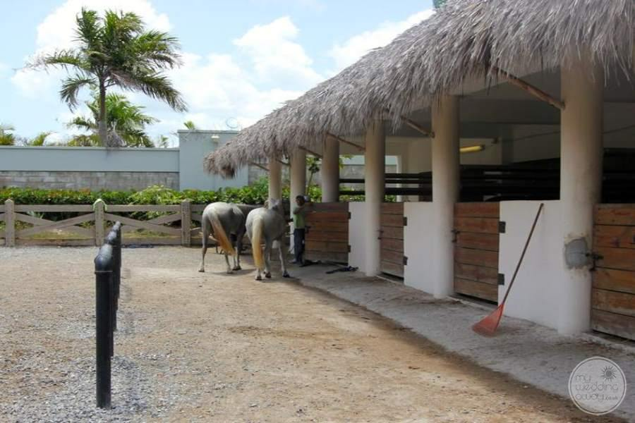 Hard Rock Punta Cana Stables