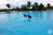 The-Crane-Resort-Swim-with-the-Dolphins