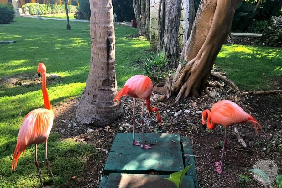 Iberostar Paraiso Del Mar Pink Flamingos