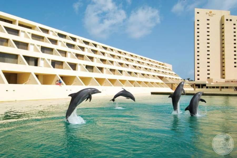 Hyatt Ziva Cancun Dolphins