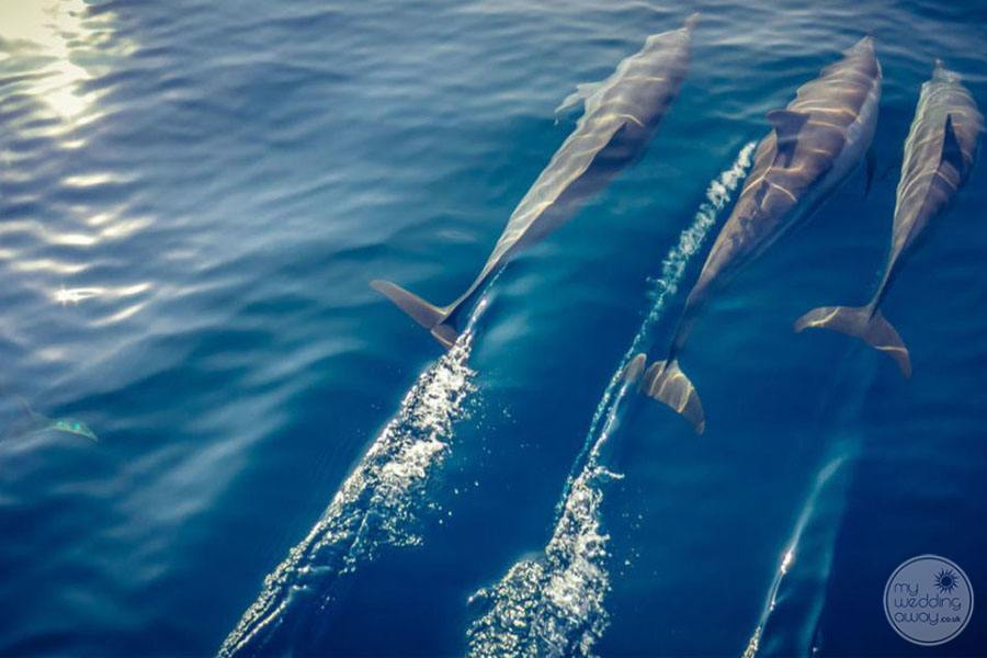 Marine Life of dolphins surrounding the property