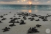 Bird-Island-Lodge-beach-turtles