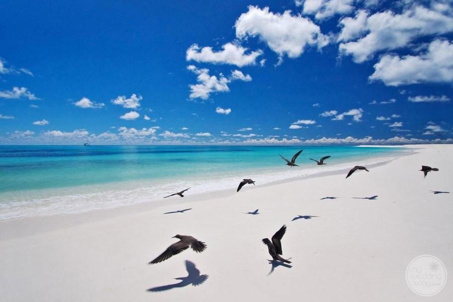 Birds on the white sand resort beachfront