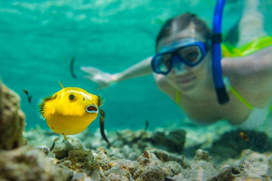 Snorkling with yellow fish around property