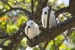 Carana-Hilltop-Villa-resort-birds