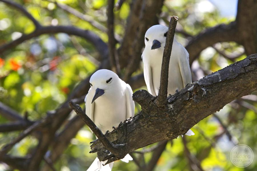 white Resort Birds in the treetop