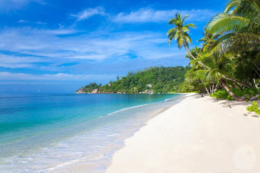 white sand beachfront and tropical palm trees
