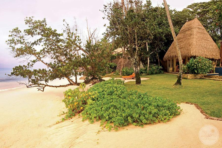 beachfront with lush tropical trees and shubs